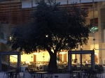 Olive Tree at Sunrise in the courtyard at the Grand Court Hotel in Jerusalem.